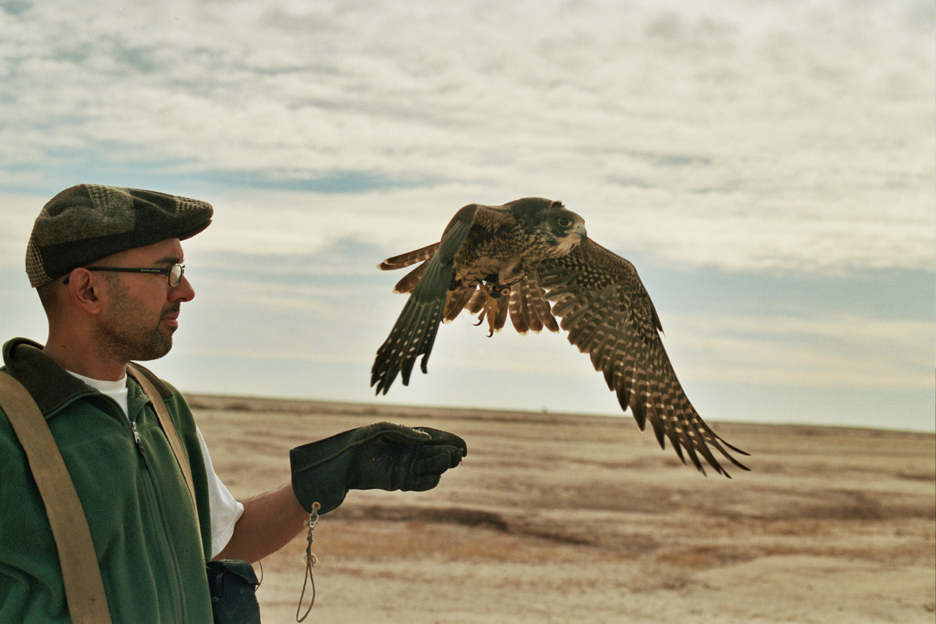 alex_aristei_Falconry_0051